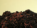 Compost with earthworms (8261570159).jpg