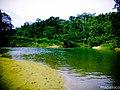 Confluencias de los rios Y-Y (Isquierda) y rio Bambana (Derecha). - panoramio.jpg