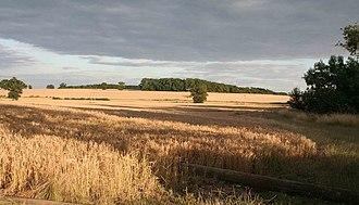 Wiseton - Image: Corn fields nr Wiseton geograph.org.uk 1408081