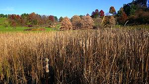 Cornell Botanic Gardens - Image: Cornell Arboretum