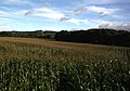 Cornfield, near Hinton, Peterchurch - geograph.org.uk - 270439.jpg
