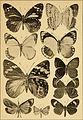 """Correspondenz-blatt des Entomologischen Vereins """"Iris"""" zu Dresden (1884) (20512278158).jpg"""
