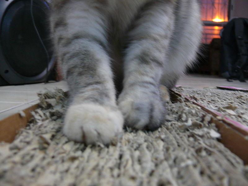 اسکراچر مقوایی گربه
