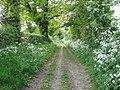 Cow parsley flowering in abundance - geograph.org.uk - 1293694.jpg
