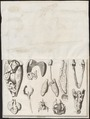 Crocodilus spec. - ingewanden en skeletdelen - - Print - Iconographia Zoologica - Special Collections University of Amsterdam - UBA01 IZ12200044.tif