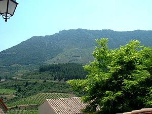 Corbières AOC - Vineyards in Cucugnan.