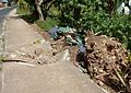 Cyclone Damaged Footpath (23772047886).jpg