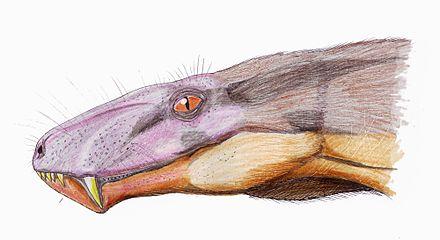 Cyonosaurus