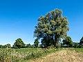 Dülmen, Hausdülmen, Baum an einem Feldweg -- 2020 -- 0293.jpg