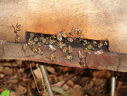 DSC00673 - bees at Emwatsi.JPG