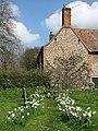 Daffodil-lined path - geograph.org.uk - 764426.jpg