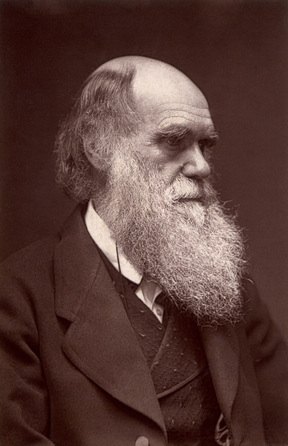 Darwin - John G Murdoch Portrait restored
