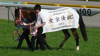 Deep Brillante Japanese Thoroughbred racehorse