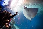 Den Bla Planet Danmarks akvarium 20130427 0108F (8687068454).jpg