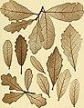 Denkschriften der Kaiserlichen Akademie der Wissenschaften, Mathematisch-Naturwissenschaftliche Classe (1889) (20233486853).jpg