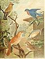 Die Nord-Amerikanische Vogelwelt (1889) (20911422806).jpg