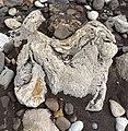 Dinosaur footprint Isle of Wight by Nick Longrich.jpg