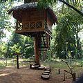 Dong Hua Sao National Bio-Diversity Conservation Area, Don, Laos.jpg