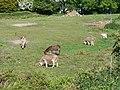 Donkeys grazing - geograph.org.uk - 1928830.jpg
