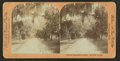 Drive in Bonaventure Cemetery, Savannah, Ga, from Robert N. Dennis collection of stereoscopic views.png