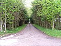 Driveway - geograph.org.uk - 171236.jpg
