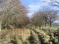Droveroad Plantation - geograph.org.uk - 344287.jpg