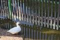 Ducks10.jpg