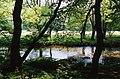 Dulverton, River Barle - geograph.org.uk - 46484.jpg