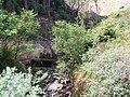 Dunoon, Bullwood - Bishop's Glen Track, Berry Burn - geograph.org.uk - 183792.jpg