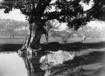 ETH-BIB-Felder im Nil-Delta-Kilimanjaroflug 1929-30-LBS MH02-07-0160.tif