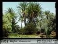 ETH-BIB-Gafsa, Oasenpartie-Dia 247-08211.tif