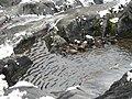 Edith Creek (f81cad7045564bdeb6b09fdbcea1936d).JPG