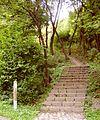Eifelsteig - Aufstieg aus dem Urfttal.jpg