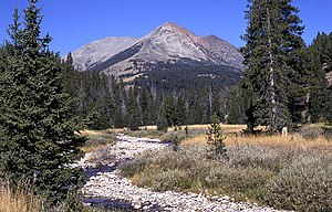 Gallatin Range - Image: Electric peak trees