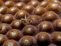 Emblemariopsis carib (Caribbean Flagfin Blenny).jpg