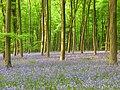 Embley Wood - geograph.org.uk - 800691.jpg