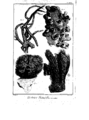 Encyclopedie volume 5-148.png