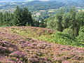 End of Menteith Hill ridge - geograph.org.uk - 549543.jpg