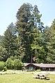 Eureka-Arcata-Fortuna, CA, CA, USA - panoramio (2).jpg