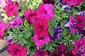 FME Flower Pic.jpg