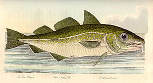 Cod liver oil - A cod