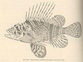 FMIB 42560 Pterois sphex Jordan & Evermann; from the type.jpeg