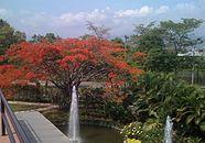 Rychlost datování bucaramanga