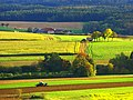 Farm - panoramio (39).jpg