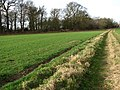Farm track - geograph.org.uk - 668460.jpg