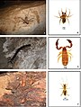 Fauna from caves of northeastern Goiás (10.3897-subtbiol.29.30418) Figure 3.jpg