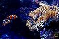 Finding Nemo (2155740832).jpg