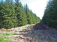 Firebreak near Loch Ronald - geograph.org.uk - 163180.jpg