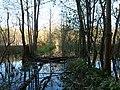 Flooded path in the Teufelsbruch swamp 29.jpg