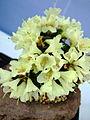 Flower-center131851.jpg